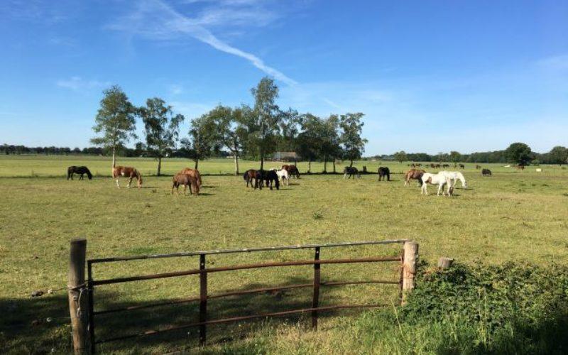 Verrassend Rondje Drenthe